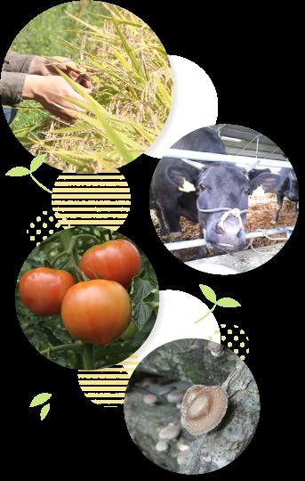 JAいわて中央では米、野菜、キノコ、肉、花を生産しています。