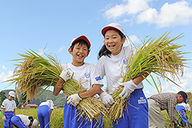 農業体験の様子